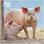 2018 Pigs Wall Calendar (Wall)