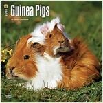 Guinea Pigs 2018 Calendar (Calendar, Wall)