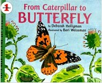 [중고] From Caterpillar to Butterfly (Paperback)