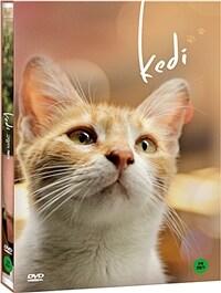 고양이 케디