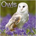 Owls Calendar 2019 (Paperback)