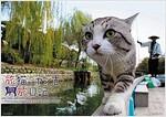 ウイング 旅猫ニャン吉 旅日記 2019年 カレンダ- CL-380 壁掛け 52x36cm 猫 (オフィス用品)