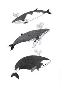 밍크고래, 혹등고래, 북극고래 포스터 (지관통 포장)