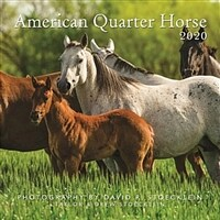 2020 American Quarter Horse Calendar (Wall)