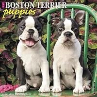 Just Boston Terrier Puppies 2020 Wall Calendar (Dog Breed Calendar) (Wall)