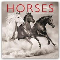 Horses - Pferde 2020 - 16-Monatskalender (Calendar)