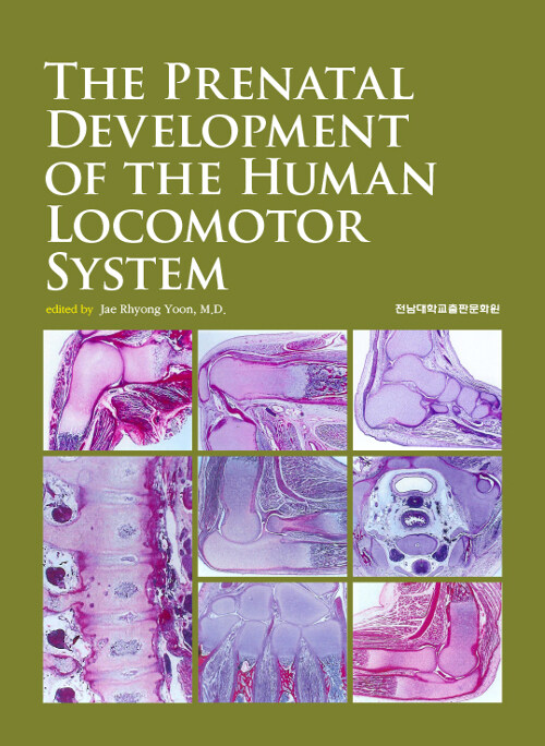 The Prenatal Development of the Human Locomotor System