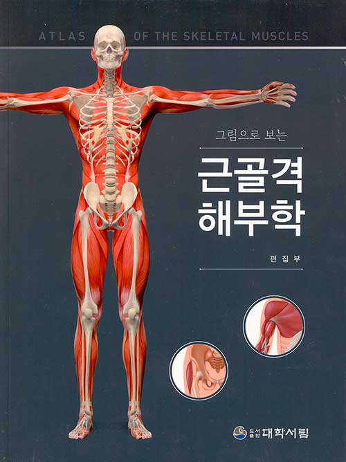 근골격 해부학