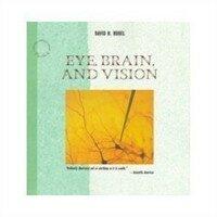 Eye, brain, and vision